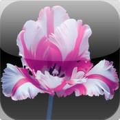 Hana Entertainment Apps